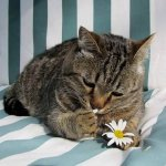 Кот поэтессы