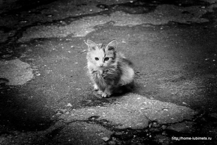 Мягкий ласковый котенок мокнет тихо под дождем