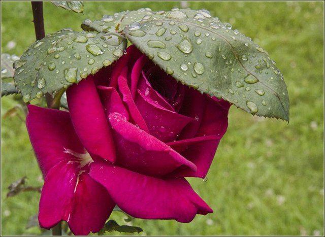 Свидание с дождем