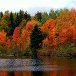 Осень в косы вновь вплетает...